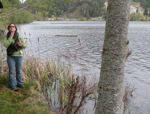 Turtles at Cranberry Lake