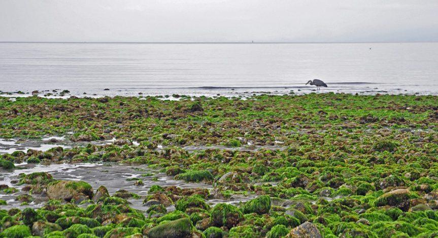 Vancouver Island birding