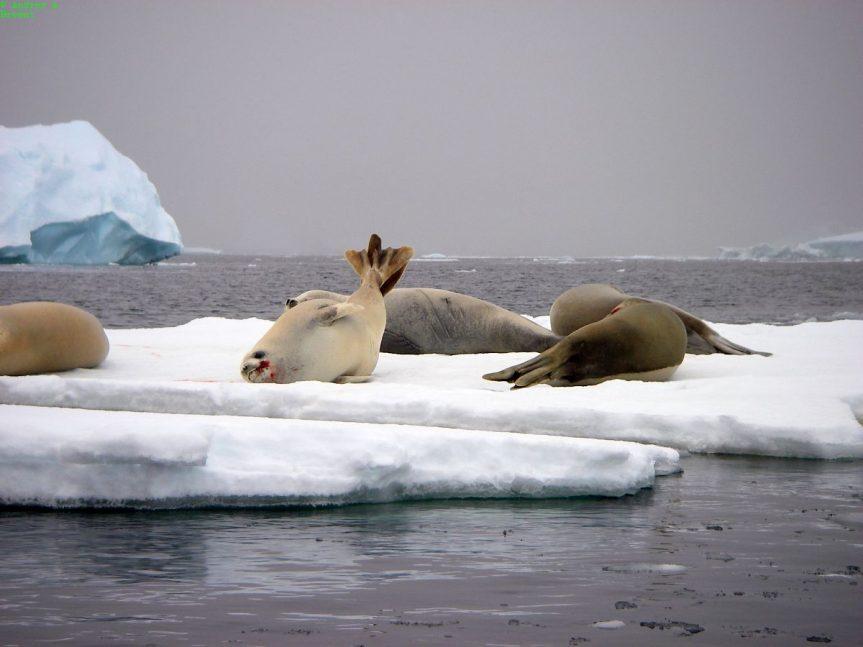 """Heather Harbord – """"Antarctica"""""""