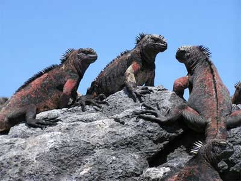 """Michael Stewart – """"Gallivanting in the Galapagos"""""""