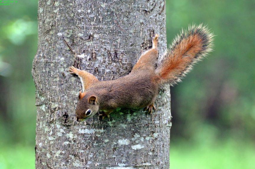 "Liz Gillis – ""Squirrels"""