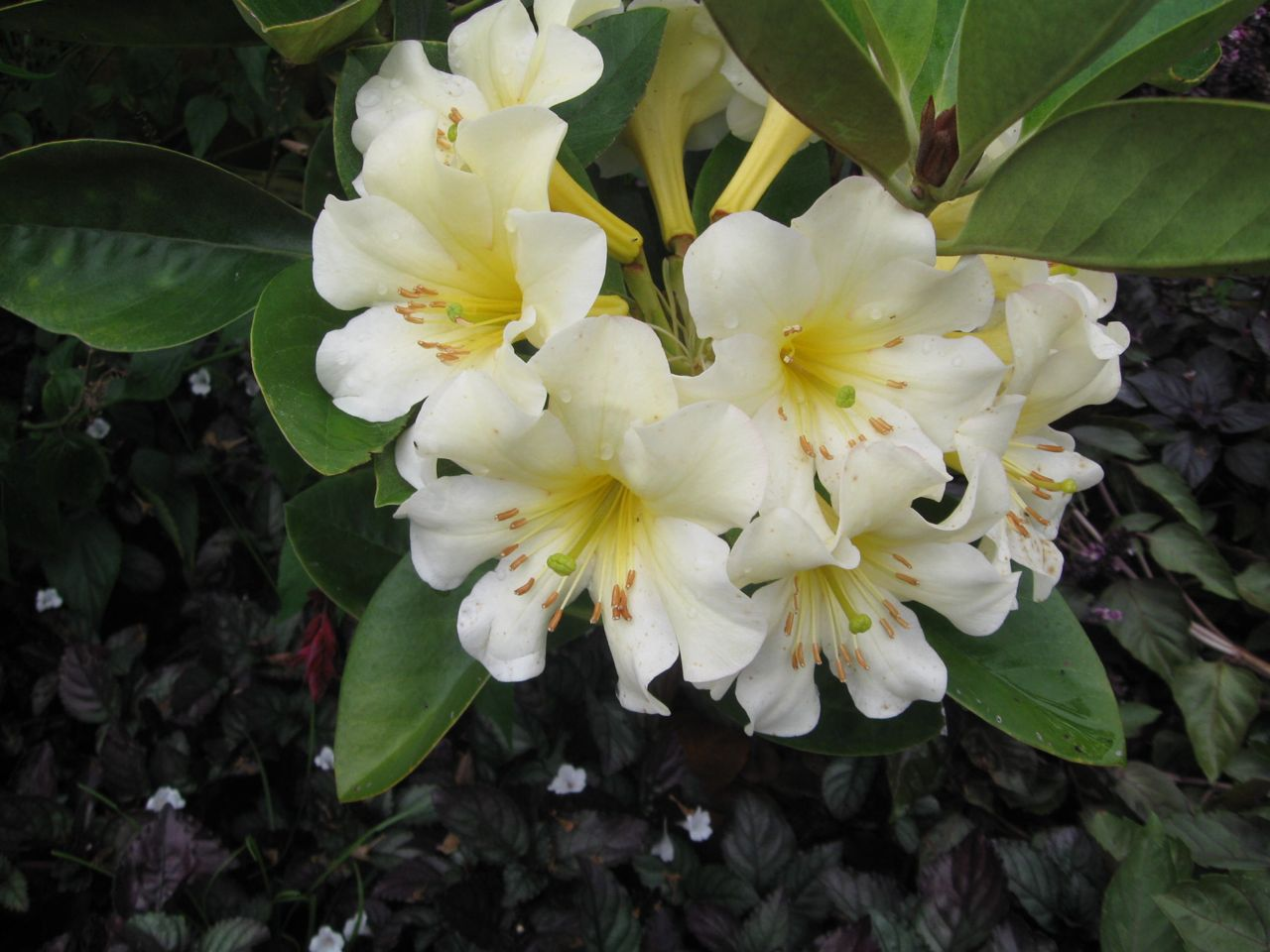David Ballantyne Botanical Gardens On The Big Island Of