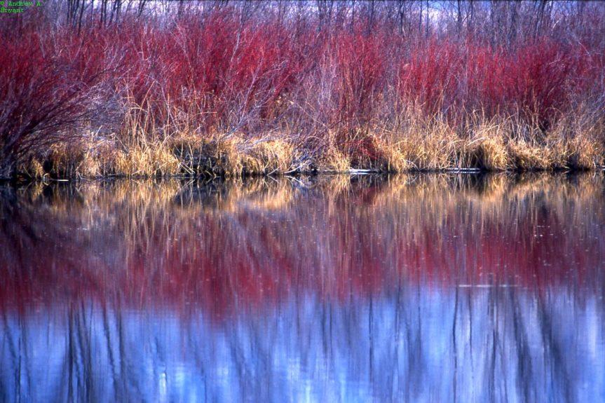 Colour in the Okanagan - A. Bryant