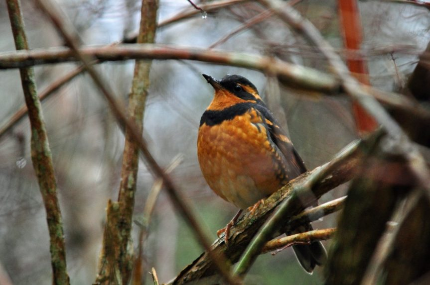 4th Christmas Bird Count for Kids