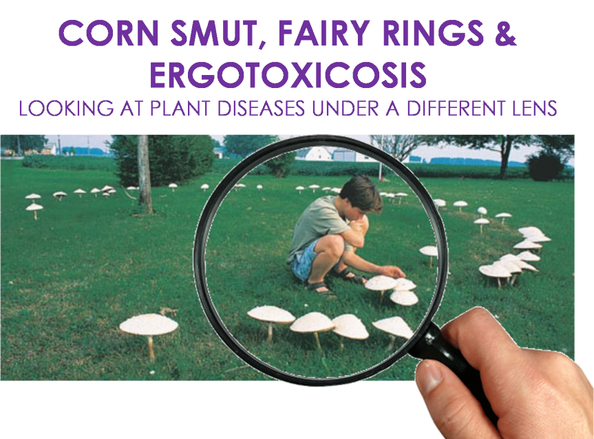 "Ioni Wais – ""Corn Smut, Fairy Rings and Ergotoxicosis"""