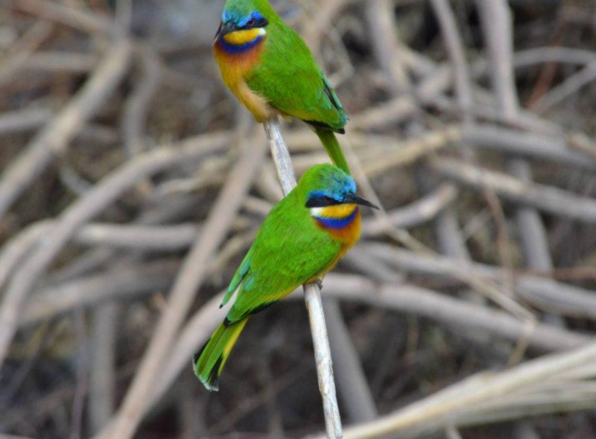 "Neil Hughes – ""Ethiopia: a birding extravaganza"""