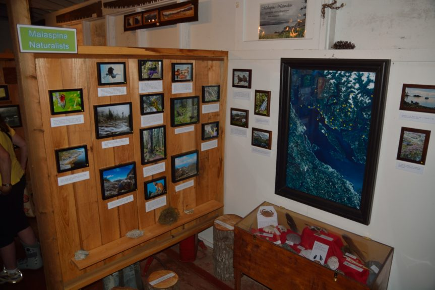 Our new Forestry Museum display