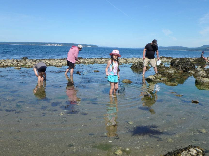 Young naturalists exploring tide pools at Powell River, BC, 15 June 2019 - David Bedry