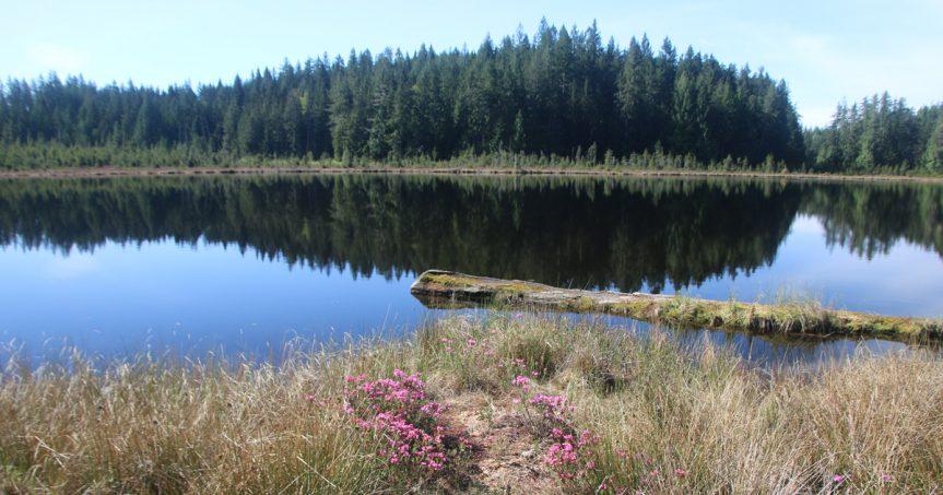 """Tom Koleszar – """"Lost Lake"""""""